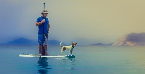 Man paddleboarding with dog